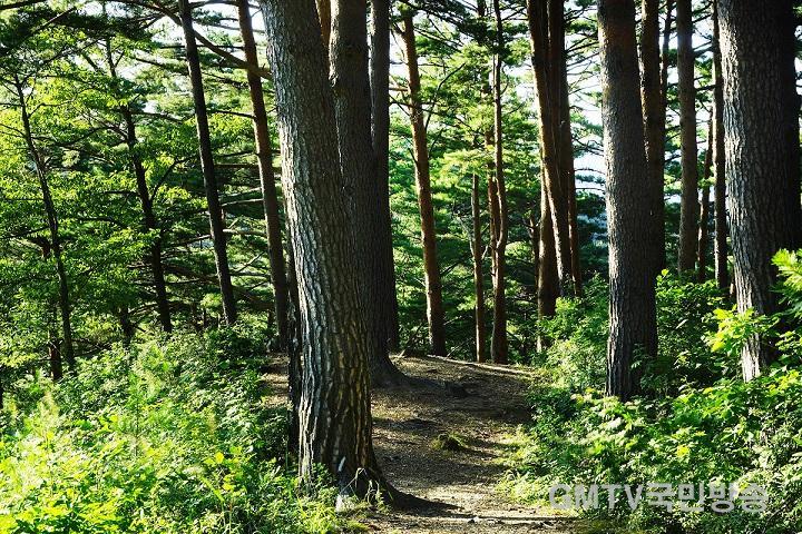 금강소나무숲길.jpg